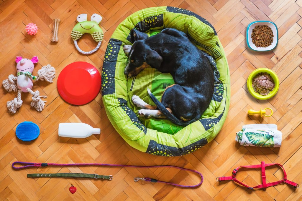 pet products as food or accessories as trending products in 2021